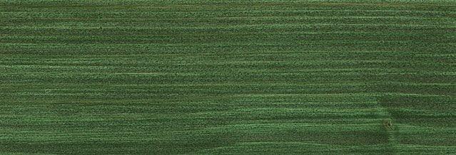 729 Jedlově zelená